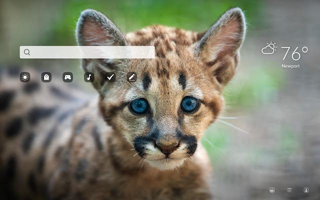 Puma - Wild Cat HD Wallpapers New Tab