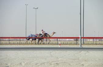 Photo: training the camel for the races