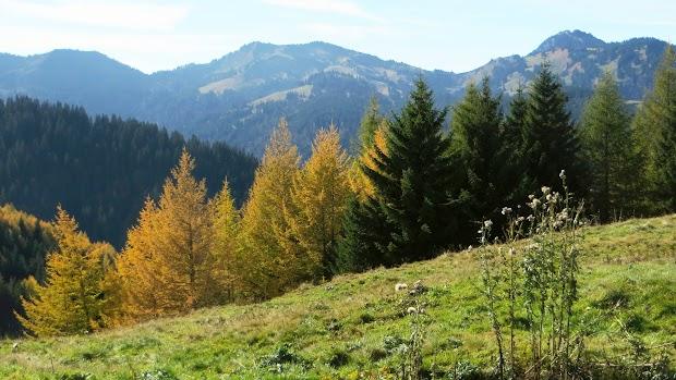 Ofterschwang Ofterschwanger Horn Siplinger Kopf Gunzesried Naturpark Nagelfluhkette Allgäu