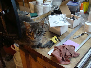 Photo: Franklin, the new inspector is keeping an eye on things!