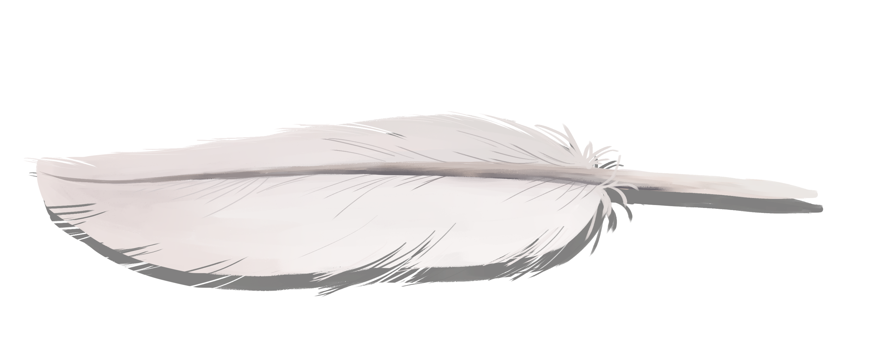 white feather with small messy bits at the end.