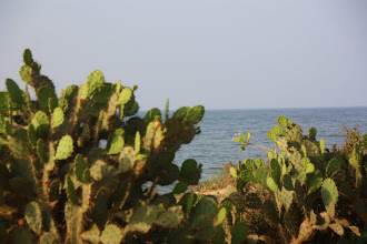 Photo: Year 2 Day 21  -  Cacti Lining the Dirt Track Hugging the Coastline