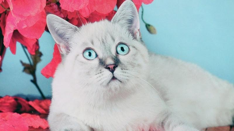 Bianco felino di Photolo