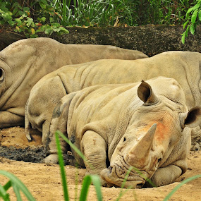 Weekend: A Day to Relax by Vinay Tyagi - Animals Other Mammals