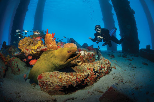 St-Croix-Pier-dive.jpg - A diver get close, but not too close, to a giant moray eel on a reef in St. Croix.