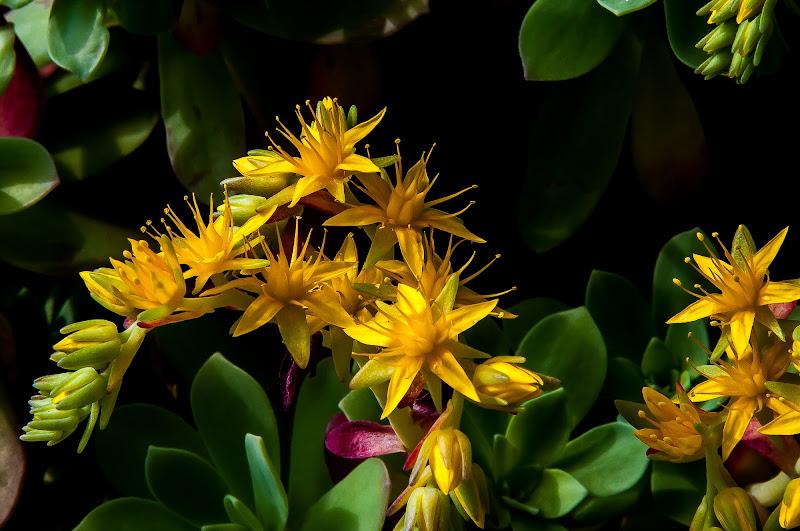 primavera in giardino di domenicolobinaphoto