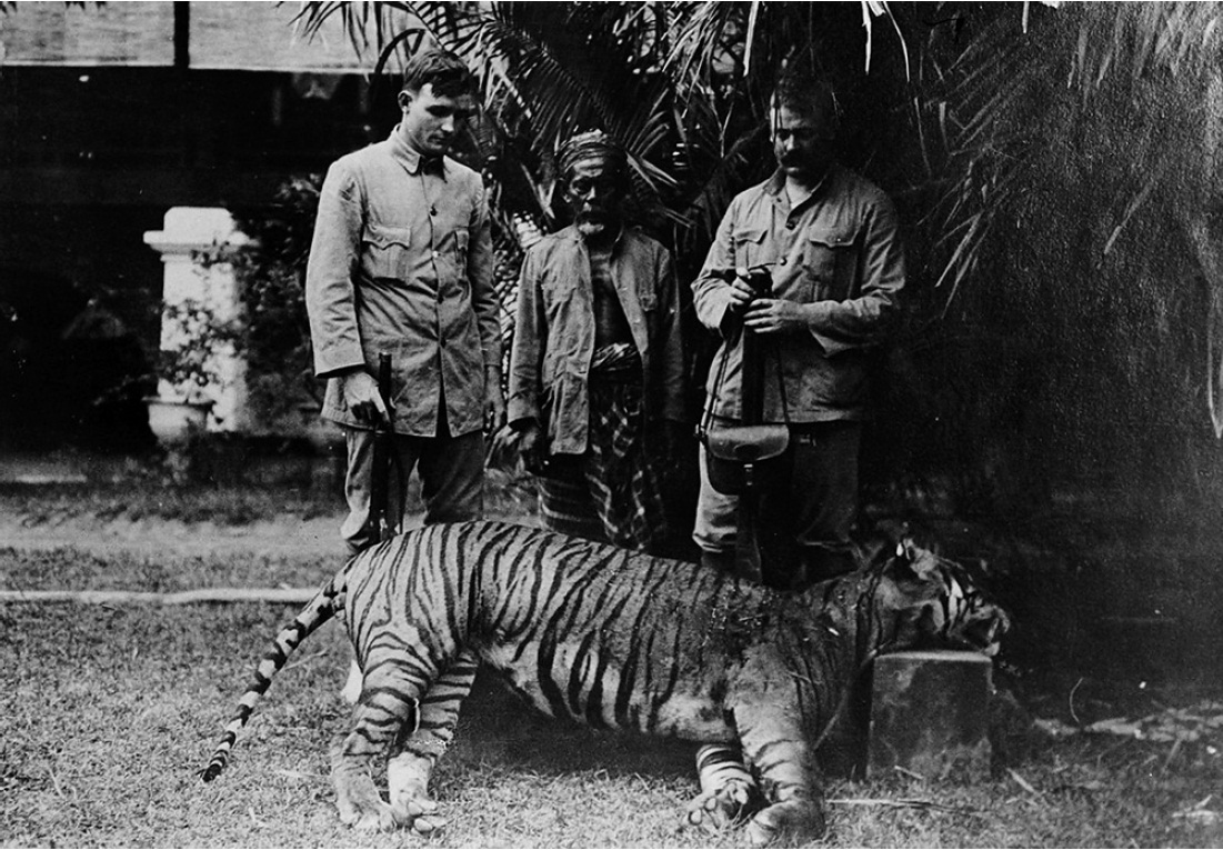 bali tiger cecil crop.jpg