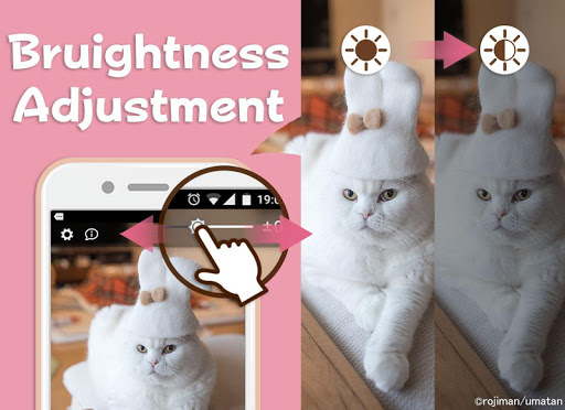 Wallpaper: Cats' Hair Hats