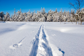 Photo: Ski trail - self made... #skiing   #snow   #winter   #trail   #visitnorway