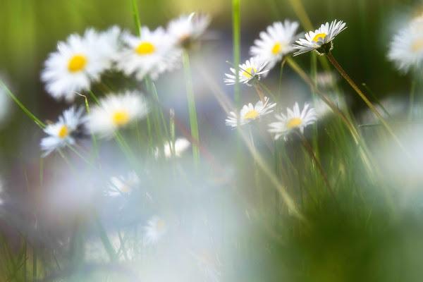soffio di primavera di antonioromei