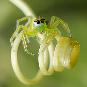 spider by Miswar Rasyid - Instagram & Mobile Android