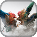 Rooster fight - Cookfighing icon