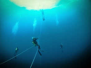 Photo: Bluewater divers on Cocos Island Expedition (Photo credit: P. Auster/NSF Grant N. DRL-1114251)