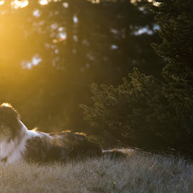 by Nikica Martinšek - Animals - Dogs Portraits