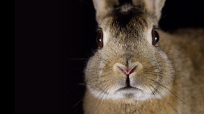 Remarkable Rabbits thumbnail