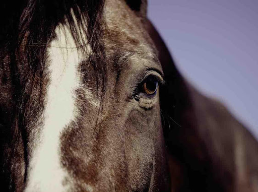 Horse Wallpaper App