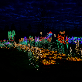 Garden D'Lights  by Todd Reynolds - City,  Street & Park  Night