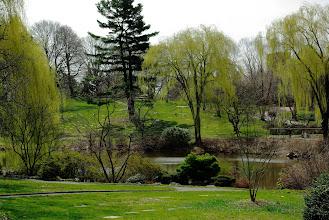 Photo: Pond at Mt Auburn Cemetery
