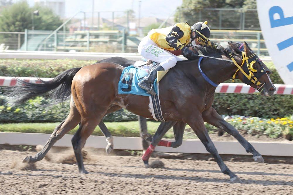 Narcisista (Strong Mandate) ganó Handicap (1000m-Arena-HCH).