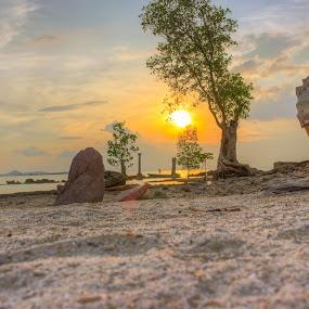 Alone tree by Muhammad Ikhsan - Landscapes Sunsets & Sunrises ( sunset, landscape )