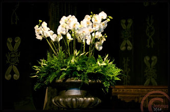 Photo: Es ist der schönste Blumentopf, der schönste auf der Welt, drum gießߴ mir meinen Blumentopf, daß er sich lange hält.