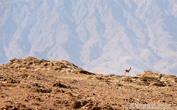 Photo: Dohfar Mountain