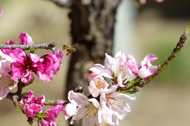 pollinator.jpeg