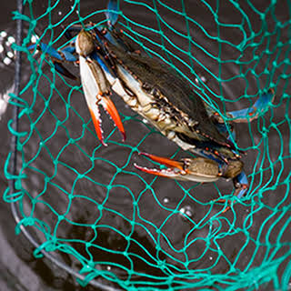 Blue Crabbing in the Outer Banks.