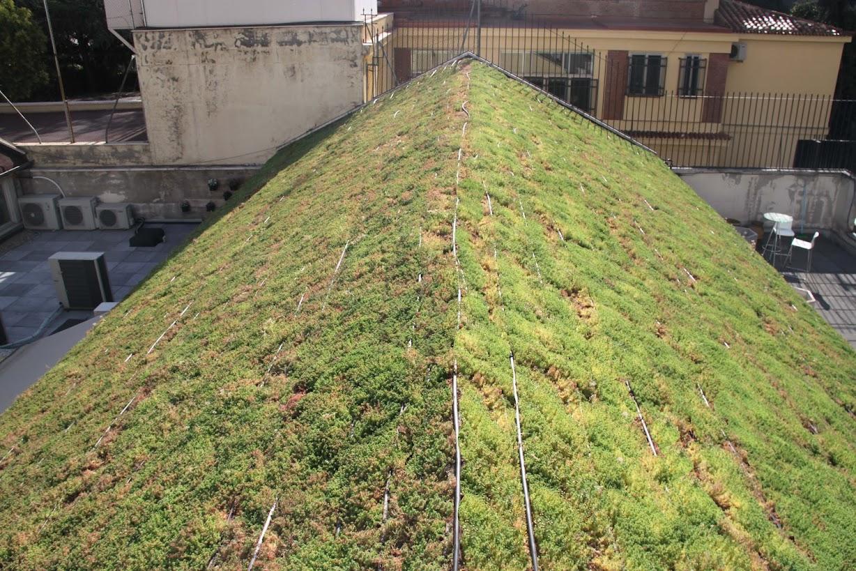 se puede ver el resultado final de la cubierta vegetal  de sistema rizoma