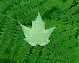 Photo: Leaf and fern, Grand Isle State Park by Linda Carlsen-Sperry.