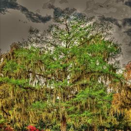 TREE by Ron Olivier - Digital Art Things (  )