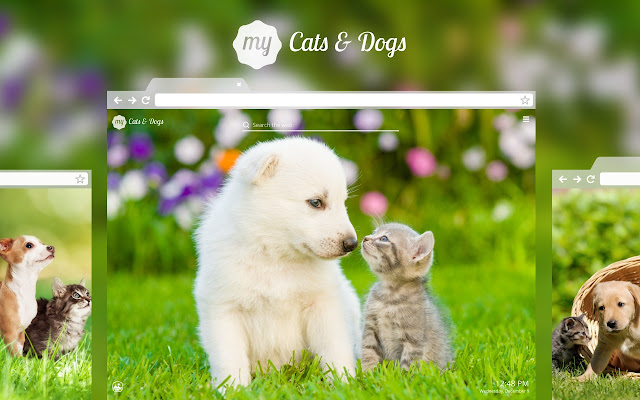 My cats dogs cute cat dog kitten wallpapers chrome web store thecheapjerseys Gallery