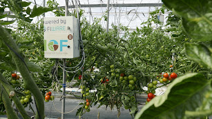 Las nuevas tecnologías incrementarán la productividad y la eficiencia de las cosechas hortícolas en el futuro.