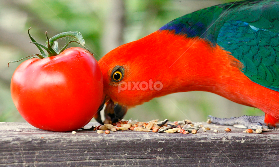 Same colour by Glenys Lilley - Food & Drink Fruits & Vegetables ( red, tomato, parrot, bir, pwcvegetables, vegetable, king,  )