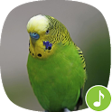 Appp.io - Parakeet Sounds icon