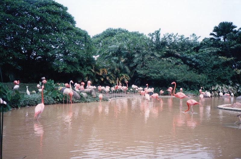 Il bagno dei fenicotteri rosa di eli2007