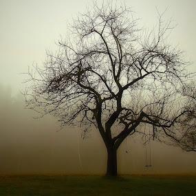 Fog by Karel Šula - Uncategorized All Uncategorized ( foggy )