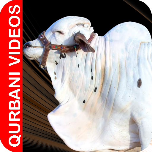 Qurbani Videos