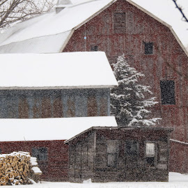 Lofty Shelter by Kathy Woods Booth - Buildings & Architecture Other Exteriors ( farm, old, red, barns, old building, farming )