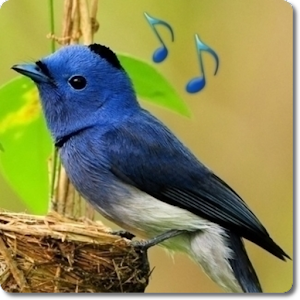 The description of Birds sound ringtones