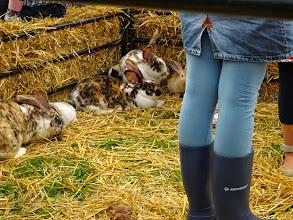 Photo: De kinderhoek met konijnen en een kooi met kuikentjes trokken veel bekijks.