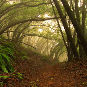 Foggy Trail by Gary Pope - Landscapes Forests ( fog, joaquin miller, trail, forest )