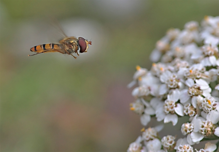 Flying to FastFood di Alessandro Remorini