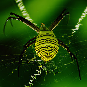 by Muhammad Buchari - Animals Insects & Spiders