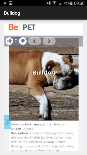 Bulldog Dog Breeds