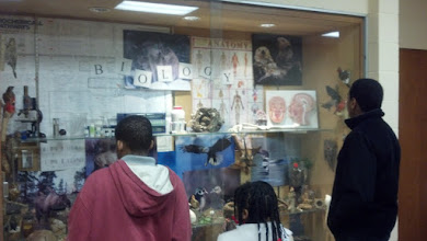 Photo: looking at the biology display