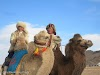 Mongolia. Golden Eagle Festival Olgii. Decorated camels at the Golden Eagle Festival