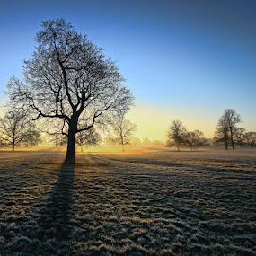 Cold start by Ian Pinn - Landscapes Sunsets & Sunrises ( winter, tree, sunrise, misty,  )