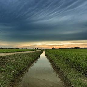 Paddy Fields by Syafizul  Abdullah - Landscapes Prairies, Meadows & Fields