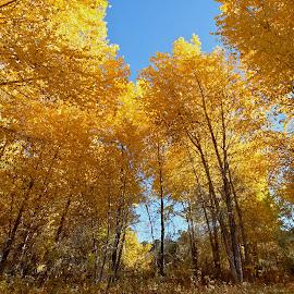 by Shawn Thomas - Nature Up Close Trees & Bushes ( seasons, fall, nature, yellow, trees )
